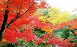 Những địa danh ngắm lá đỏ nổi tiếng Trung Quốc