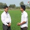 Mô hình sản xuất lúa giống ở xã Tân Phú – huyện Cai Lậy