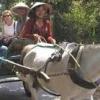 Du lịch bằng xe ngựa ở Thới Sơn
