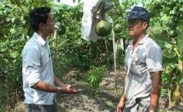 """Cây lành trái ngọt""""Mô hình trồng gấc ở Tân Phước"""""""