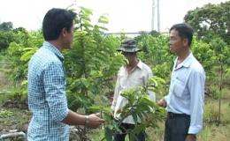 """Cây lành trái ngọt """"Mô hình trồng mãng cầu xiêm Thái ở huyện Cái Bè"""""""