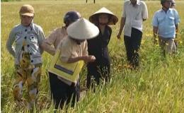 Gò Công Đông – tiềm năng và triển vọng 21.06.2014