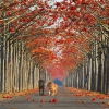 Những con đường đẹp như tranh vẽ