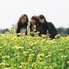 Lạc giữa cánh đồng hoa cải bên sông Đuống