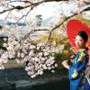 Muôn sắc hoa xuân tại Nhật Bản