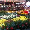 Nhộn nhịp Chợ hoa Xuân Lạc Hồng 2015