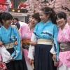 Lễ hội hoa Anh đào Nhật Bản diễn ra từ ngày 11-12/4 tại Hoàng thành Thăng Long