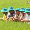 """Nông nghiệp và phát triển nông thôn """"Kinh nghiệm phòng trừ đạo ôn"""""""