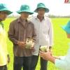 """Nông nghiệp và phát triển nông thôn """"Quản lý bệnh đạo ôn vi khuẩn"""""""