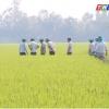 """Nông nghiệp và phát triển nông thôn """"Giúp lúa trổ khỏe và hạt chắc tốt"""""""