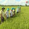 """Nông nghiệp và phát triển nông thôn """"Giúp lúa trổ khỏe"""""""
