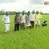 """Nông nghiệp và phát triển nông thôn """"Quản lý tốt bệnh đạo ôn vi khuẩn trên lúa Đông xuân"""""""