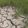 Hỗ trợ 6 tỉnh khắc phục hạn hán, xâm nhập mặn