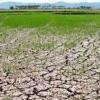 Hỗ trợ 34 địa phương khắc phục hạn hán, xâm nhập mặn