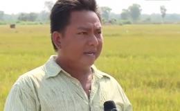 """Chuyện làng chuyện phố """"1.000 ha lúa đã chết"""""""