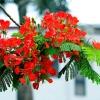 Những loài hoa báo hiệu mùa hè