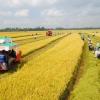 Chính phủ thống nhất mở rộng hạn điền, tích tụ ruộng đất