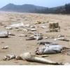 Kỷ luật Ban cán sự đảng Bộ Tài nguyên và Môi trường và một số cán bộ có liên quan đến sự cố về môi trường tại 4 tỉnh miền Trung