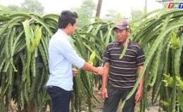 """Cây lành trái ngọt """"Mô hình chuyển dịch cơ cấu kinh tế Vườn trên nền đất lúa kém hiệu quả ở huyện Gò Công Đông""""."""