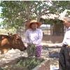 Dự án phát triển kinh tế 5 hộ nghèo ở Tân Phú Đông