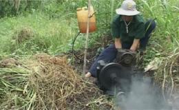Nhiều diện tích lúa hè thu sớm huyện Tân Phước bị đỗ ngã