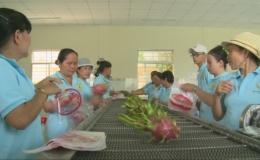Tiền Giang đầu tư hơn  2.184 tỉ đồng phát triển cây thanh long