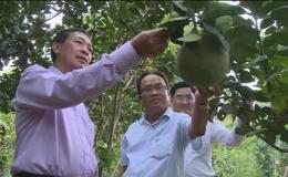 Đoàn công tác Tp. Đà Nẵng tham quan vùng nguyên liệu nông sản
