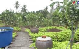 """Cây lành trái ngọt """"Khu vườn của ông Trương Vĩnh Trọng – p1″"""