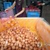 Chính phủ Hàn Quốc xin lỗi người dân vì vụ bê bối trứng bẩn