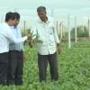 Hiệu quả thiết thực từ tổ hợp tác sản xuất rau an toàn xã Long Thuận- TXGC