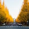 Mùa thu đẹp đến nao lòng ở Tokyo