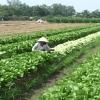Mô hình hợp tác xã nông sản ở Tân Lý Tây – Huyện Châu Thành.