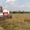 Cánh đồng lớn sản xuất lúa.