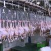 Tiền Giang siết chặt chất lượng sản phẩm gia súc gia cầm