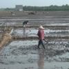 Từ nay đến năm 2025, các huyện phía Đông của tỉnh Tiền Giang chuyển đổi mùa vụ và cắt vụ hơn 26.000 hecta