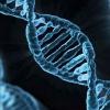 Đột phá mới về công nghệ chỉnh gien