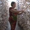 Mô hình trồng nấm bào ngư đem lại hiệu quả kinh tế cao