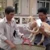 Sư đoàn 8 – Quân khu 9 tặng con giống cho các hộ gia đình có hoàn cảnh khó khăn xã Long Hưng