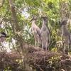 Tiền Giang kêu gọi đầu tư mở rộng Khu Bảo tồn sinh thái Đồng Tháp Mười