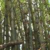 Vị thuốc quanh ta – Công dụng chế phẩm từ cây tre