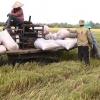 Nông dân huyện Cai Lậy trúng mùa được giá vụ lúa hè thu.