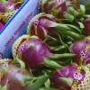 Kỳ vọng tiềm năng trái cây Tiền Giang sau hội nghị xúc tiến đầu tư
