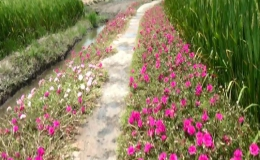 Những tuyến đường hoa khoe sắc rực rỡ