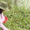 Hoàn cảnh em Võ Thị Hồng Đào – Thị xã Gò Công