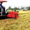 Xuất khẩu gạo trở lại thời hoàng kim?