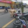 Tai nạn giữa 02 xe mô tô làm 01 người nhập viện
