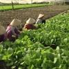 Hỗ trợ 3 triệu đồng/hecta chuyển đổi cơ cấu cây trồng trong vùng dự án ngọt hóa Gò Công