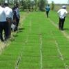 Tiền Giang triển khai dự án vùng sản xuất lúa ứng dụng công nghệ cao