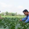 Đa dạng hóa cây trồng để sống chung với lũ