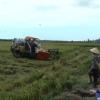 Tân Phú Đông vượt khó vươn lên